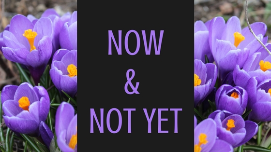 Now and Not Yet - Crocuses & Spring