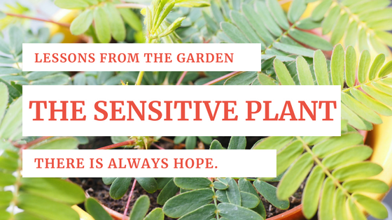 Lessons from the Garden_ The Sensitive Plant
